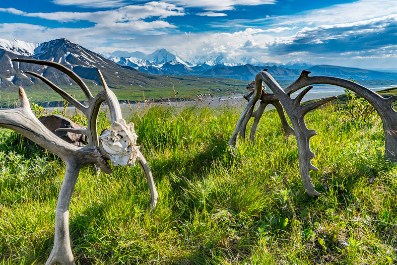 denali national park is one of America's highlights