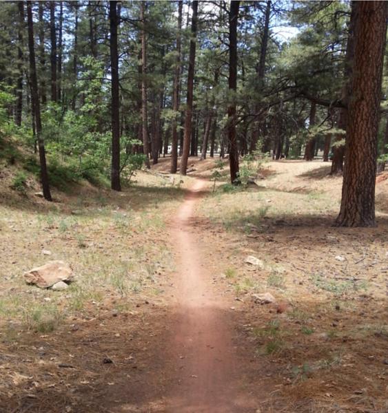 New Mexico: Zuni Mountain Trail System