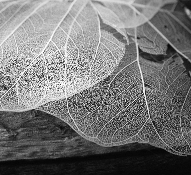Lace leaves