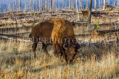 Yellowstone National Park, Wyoming Sept 2015