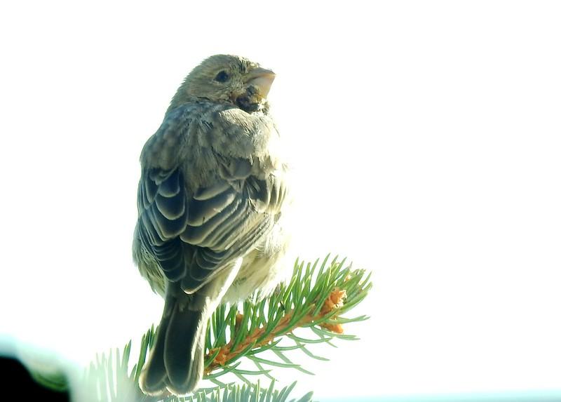 birds (121).JPG