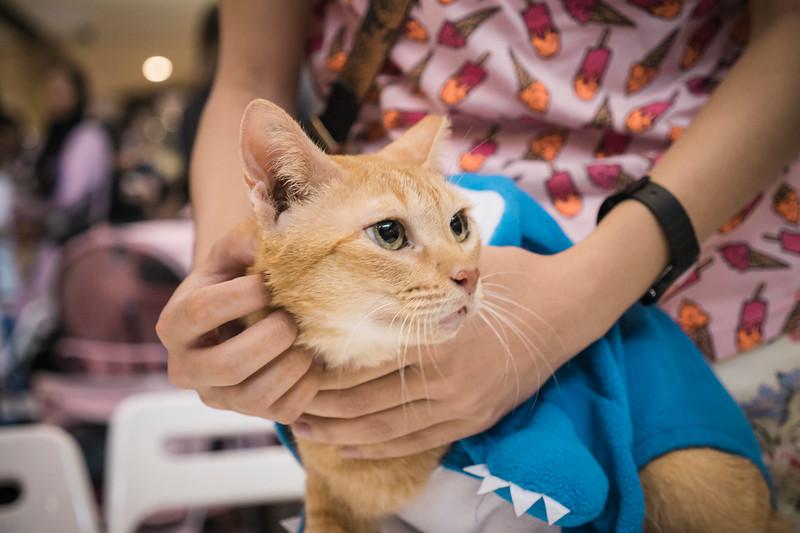 VividSnaps-The-Seletar-Mall-CAT-Dress-Up-Contest-126.jpg
