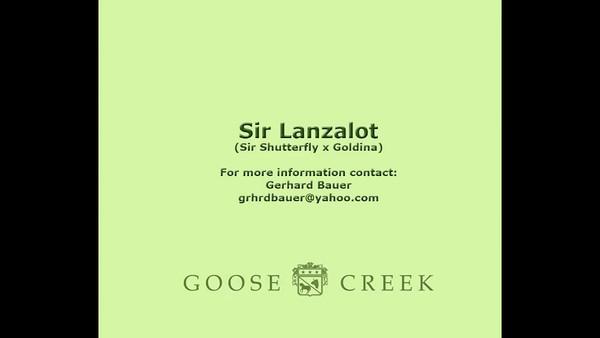 Sir Lanzalot