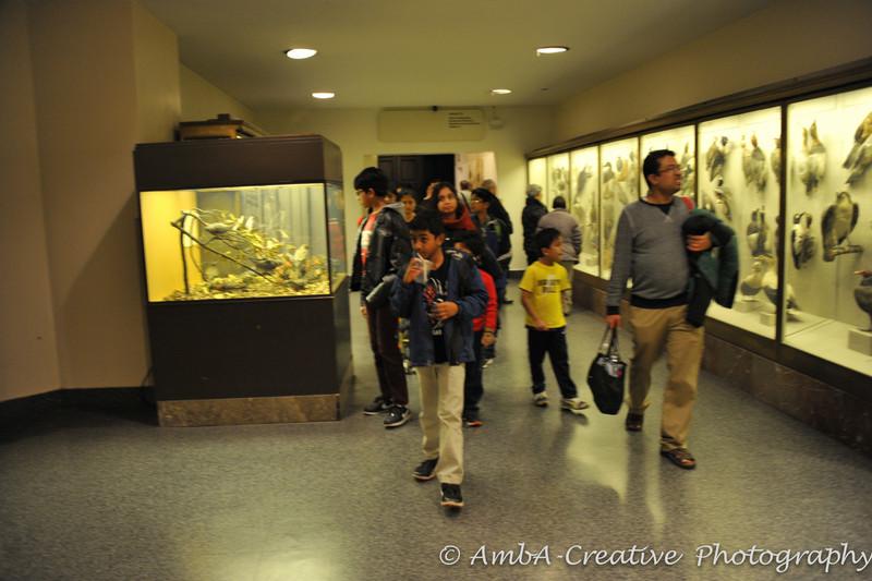 2013-12-30_AMNHMuseum@NewYorkNY_45.jpg