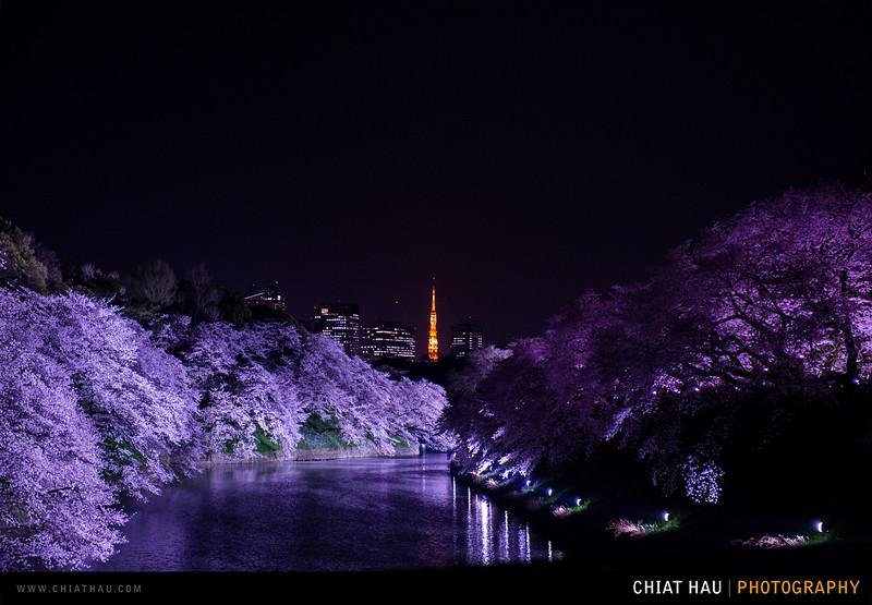 Japan_Tokyo_Apr_2016-393.jpg