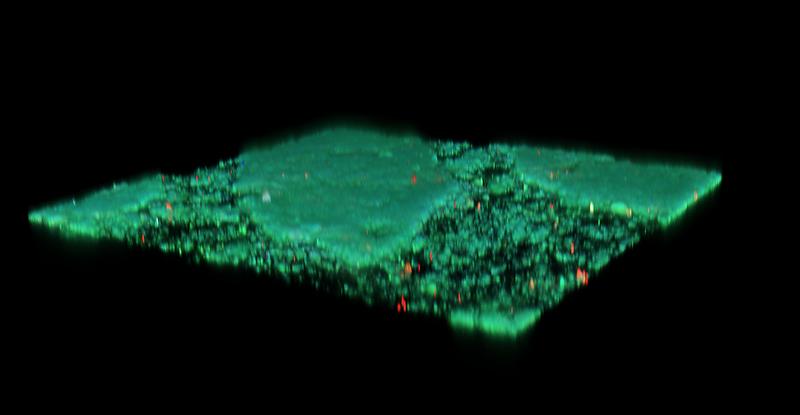 Malaya Straits Settlements KGV chalky paper confocal microscopy 3D