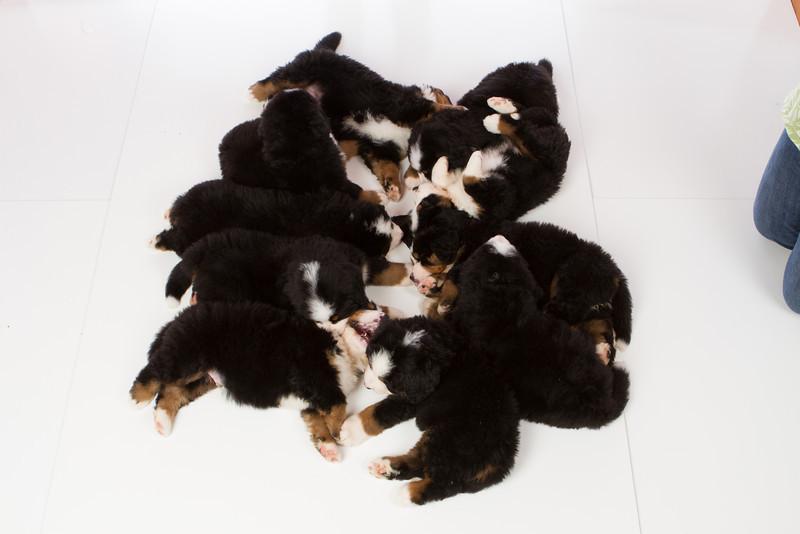 2013-Pearson Pups-Jun02-0513.jpg