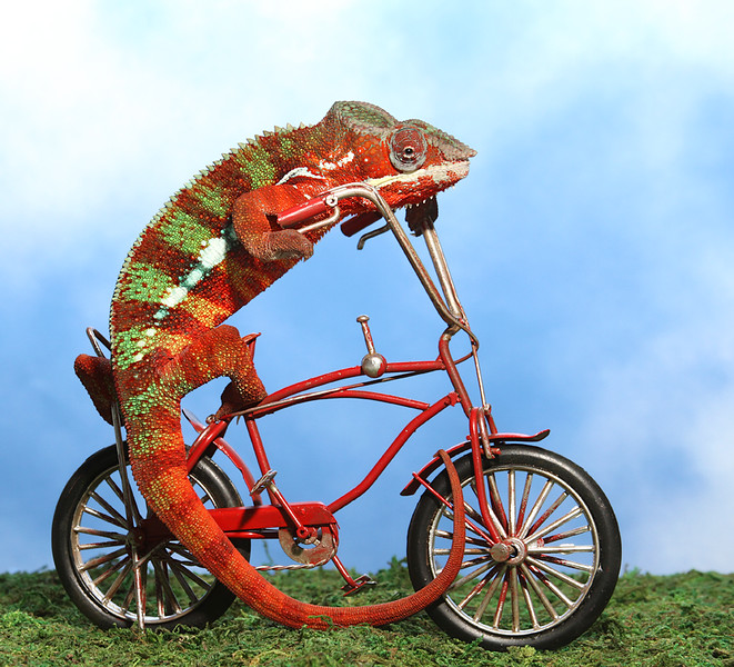Chameleon Riding Bike.jpg