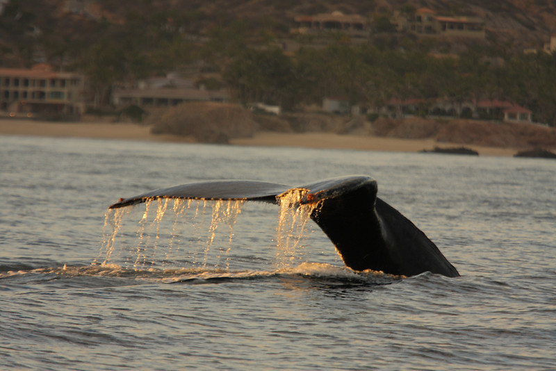 Mexico_Cabo_Whales 18.JPG