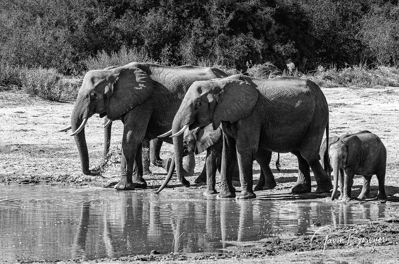 Elephants Botswana-19.jpg