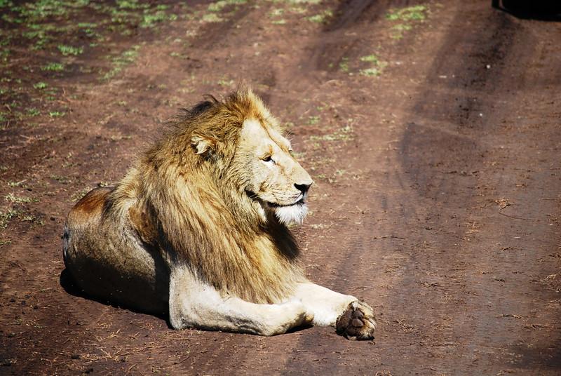 Ngorongoro (117).JPG