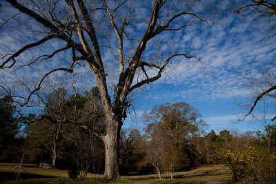 Deer hunting at Mistletoe Plantation with Scott Farve in Natchez Mississippi