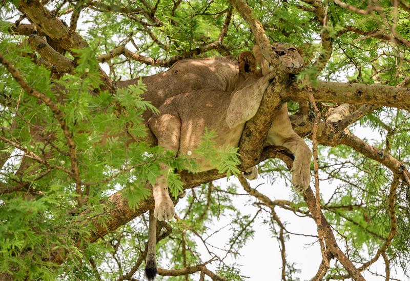 Uganda_T_QE-1393.jpg