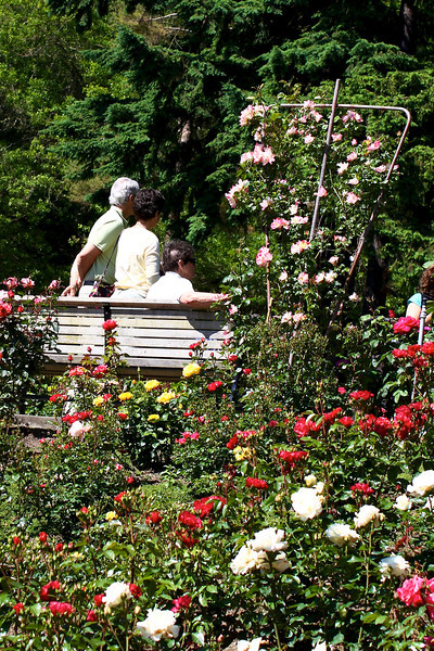 Portland International Rose Test Garden  2227.jpg