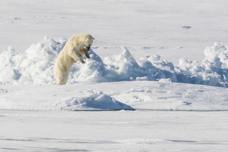 Inspirato-Arctic_Expedition18-05-Bear_Fjord-2141.jpg