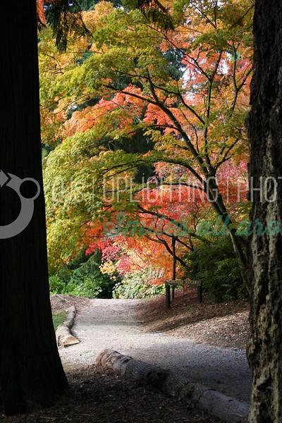 Japanese Maples_batch_batch.jpg