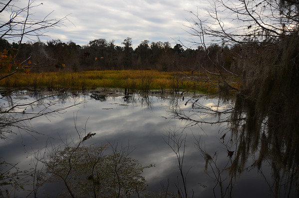 Alligator Lake December 2013