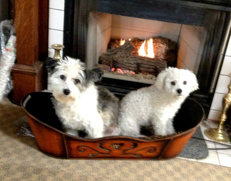 Fred's Dogs Know How To Deal With The Winter Chill