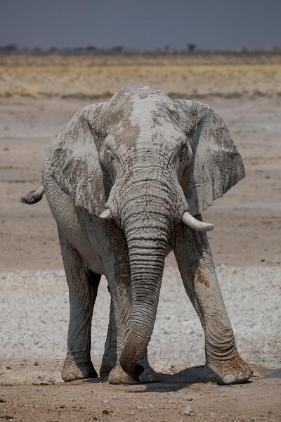 Namibia 69A8500.jpg