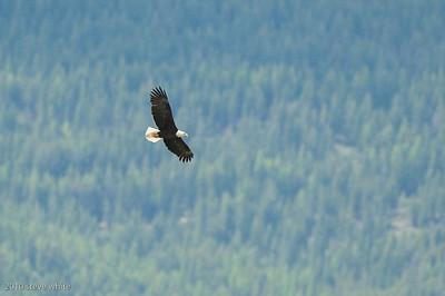 British Columbia & Montana 2010