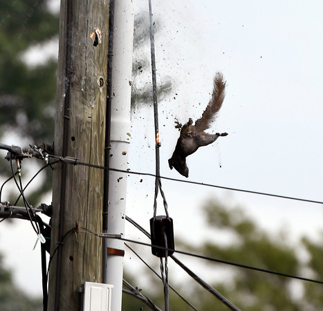 7/6/2018 Mike Orazzi | Staff Bristol firefighters on scene of a power pole fire after a grey squirrel somehow caused a fire and small explosion on Dallas Avenue Friday afternoon.