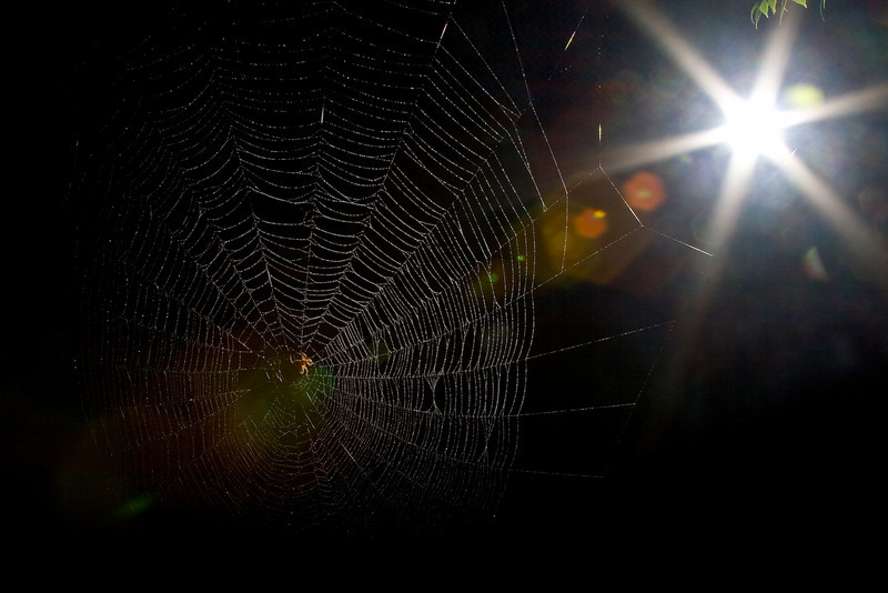 Spiderman-106.jpg