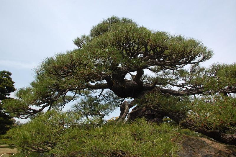 04-Japan2011_0400.JPG
