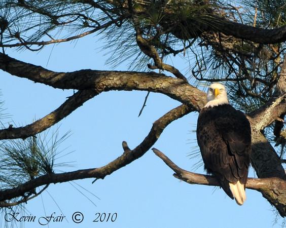 St. Augustine Eagles 2010