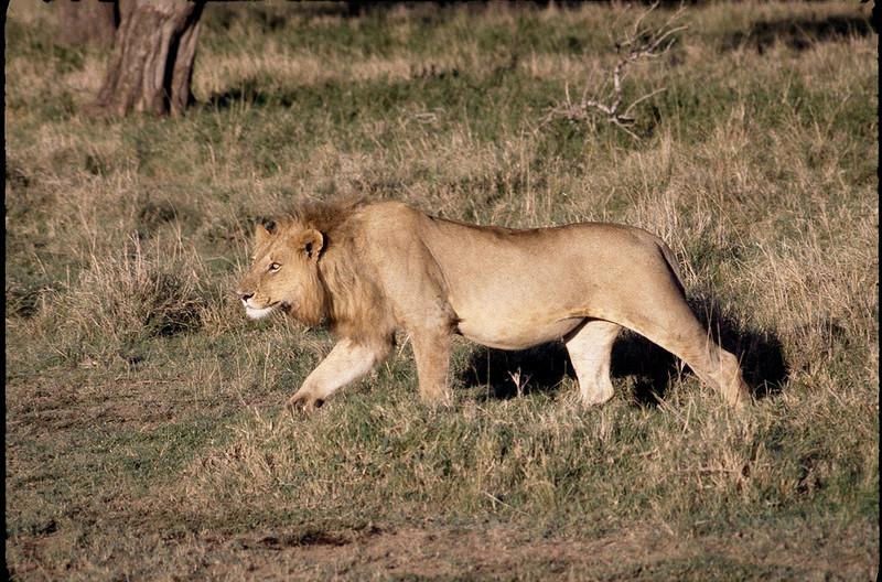 Kenya2_031.jpg