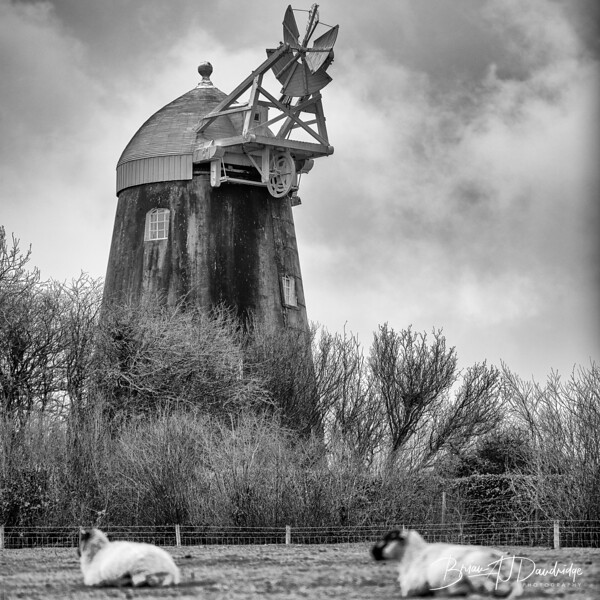 U3A_Windmills-9742-Edit.jpg