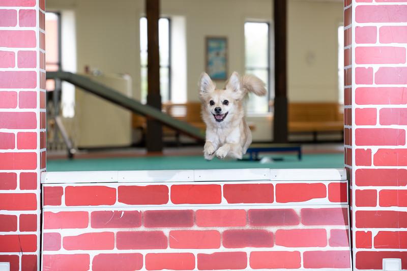 SPCA_Agility-31.jpg