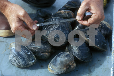 multiple-areas-closed-to-oyster-harvest-in-5-texas-bays
