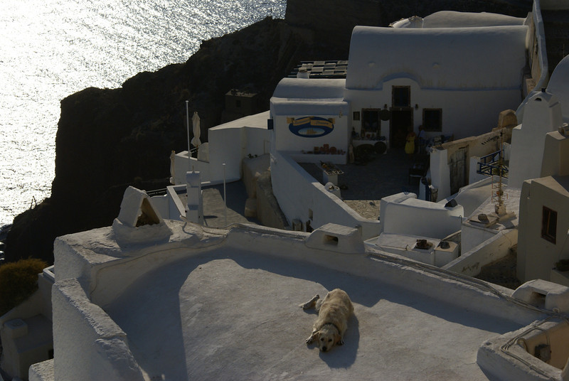 A dog's life, Oia, Santorini, Greece