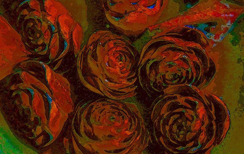 rose cones 6-4-2007.jpg