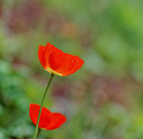 Fleurs légères