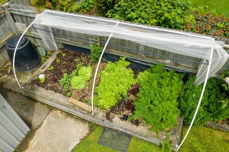 Garden091218-012.jpg