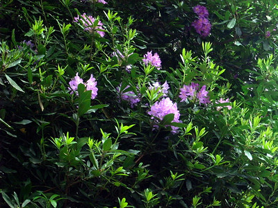 Savill Garden (2009-05-25)