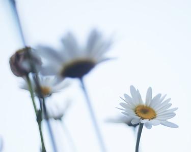Florascapes