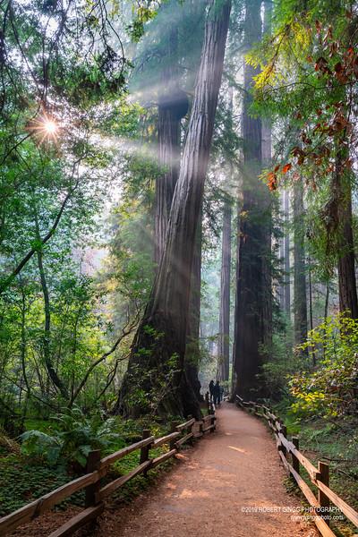Muir Woods-7173.jpg