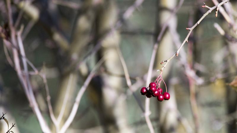 berry cool 2.jpg
