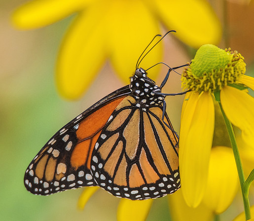 Butterfly Rainforest - University of Florida, Gainesville, FL