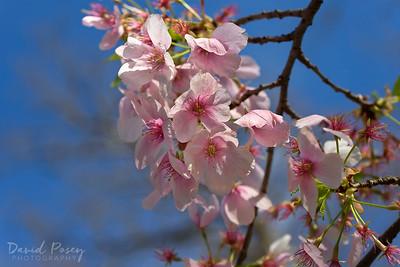 Springtime in the Nation's Capital