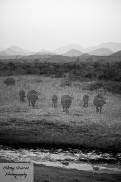 Kenya Wildlife-8.jpg