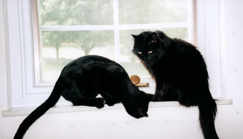 2000_April_More_Cats_0004_a.jpg