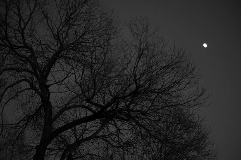 Black and White at Dusk.jpg