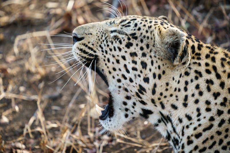LeopardHills-20171023-1381.jpg