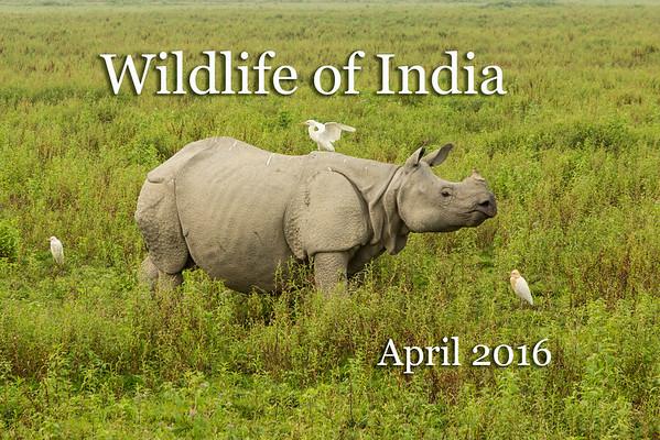 India Wildlife 2016