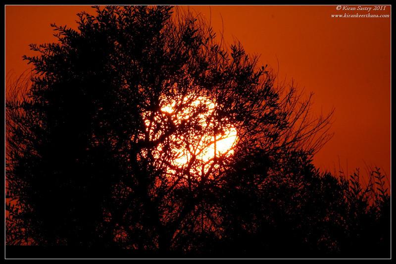 Sunset seen through a tree from San Elijo Lagoon, Rios Ave, San Diego County, California, December 2011