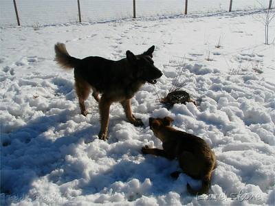 2007 Brita and Teddy playing in the snow