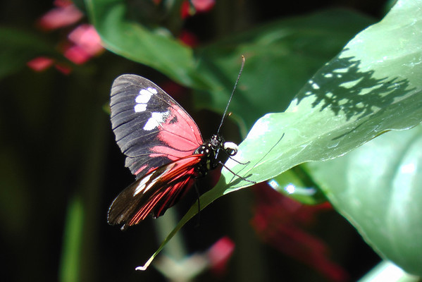 Rosine Smith Sammons Butterfly House & Insectarium